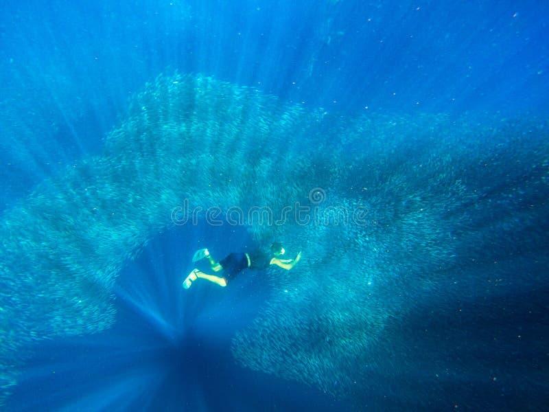 对沙丁鱼鱼学校的人下潜 巨大的群在热带海开阔水域的远洋鱼  Freediver水中 免版税库存照片