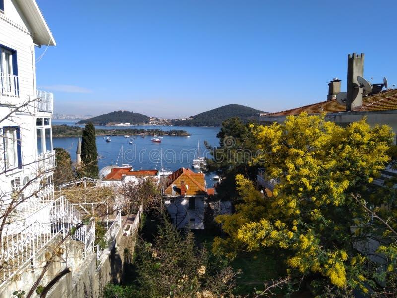对海、海岛和开花的树的完善的假日视图小山 库存照片