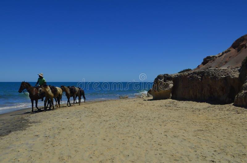 对海边的马背乘驾在一好日子 免版税图库摄影