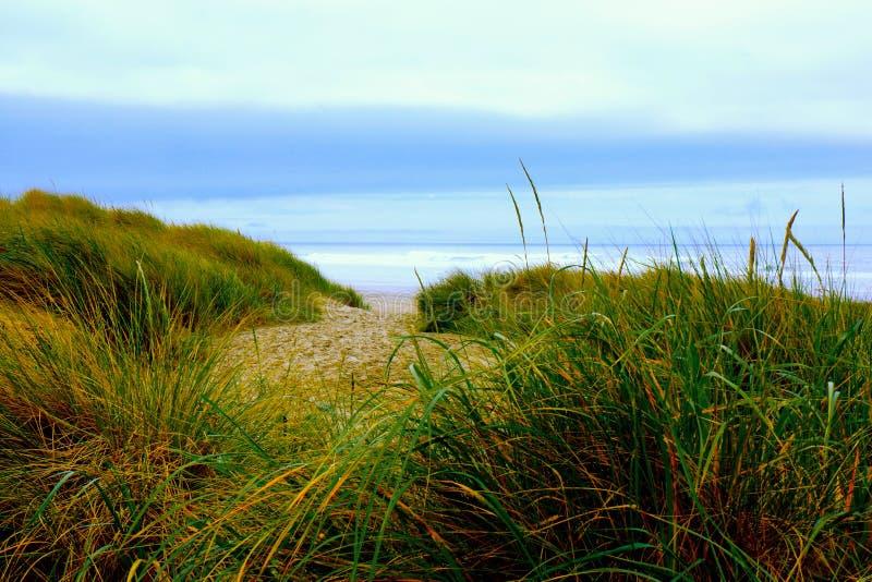 对海滩的草路 免版税库存图片