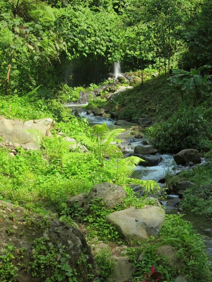 对瀑布的方式,巴厘岛,印度尼西亚 免版税库存图片