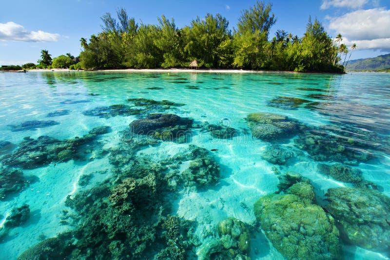 对热带水中的珊瑚岛下块礁石 免版税库存照片