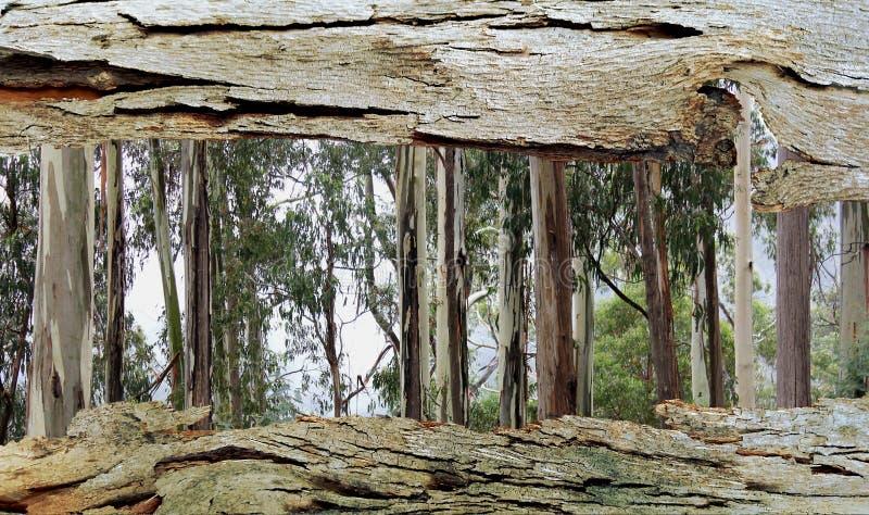 对玉树的树皮窗口 图库摄影