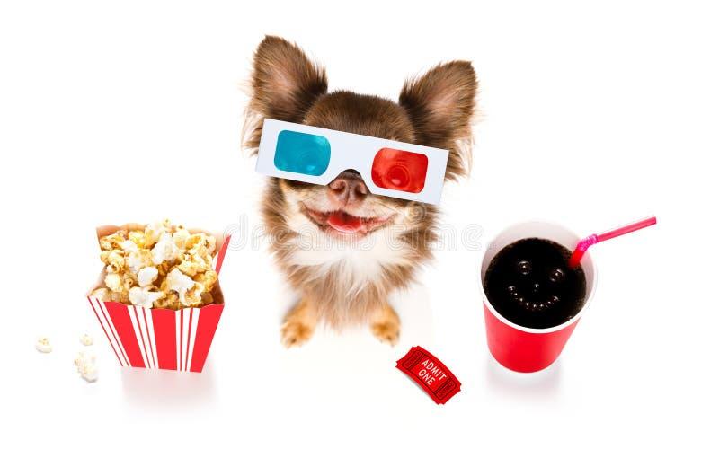 对电影的狗 库存照片