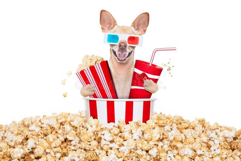 对电影的狗 免版税库存照片