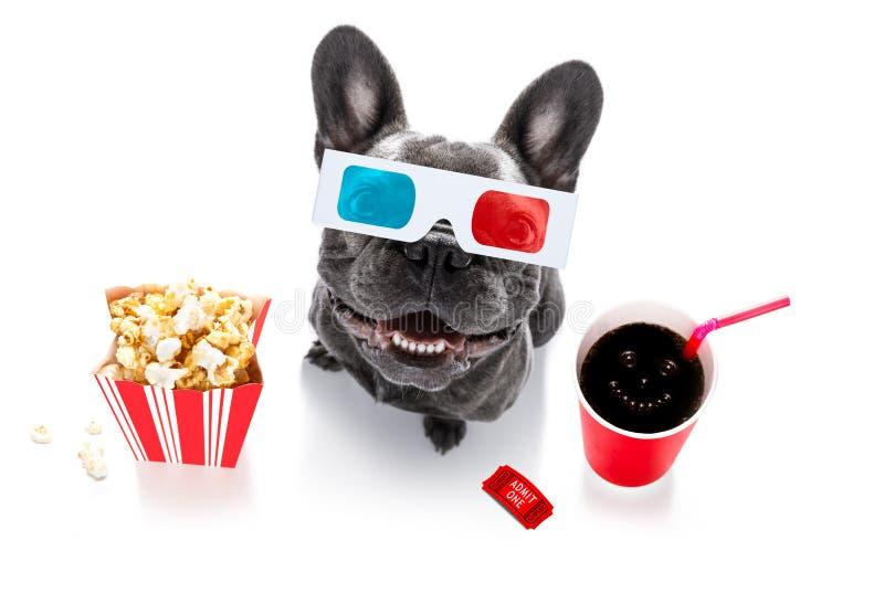 对电影的狗 免版税图库摄影