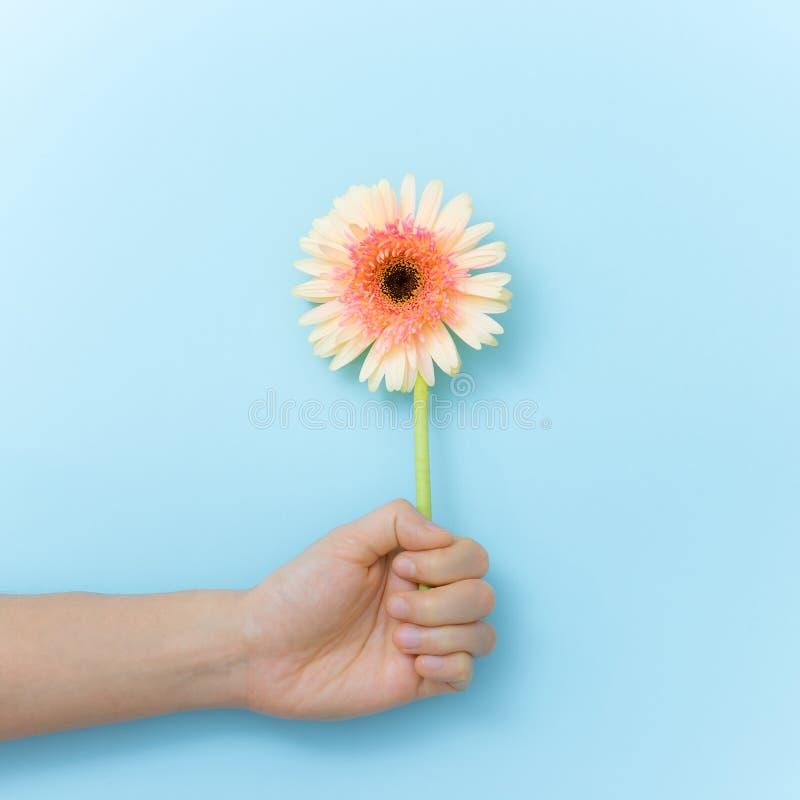 对礼物的美丽的花在手中 免版税库存照片