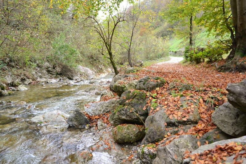 对秋季山道路和在旁边纯净的山水小河的美丽的景色  免版税库存照片