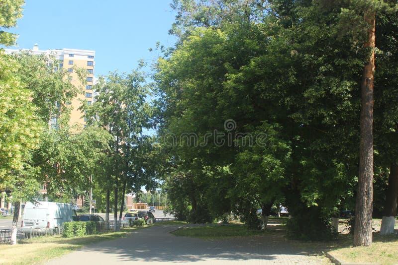 对科罗廖夫的步行 在Isaeva街道上的绿色胡同 免版税图库摄影