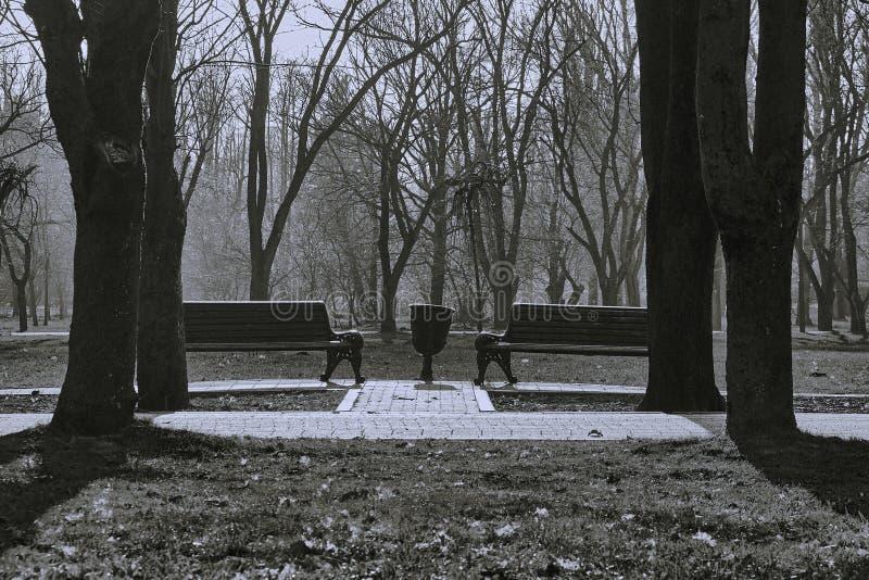 对称在秋天公园 免版税库存照片