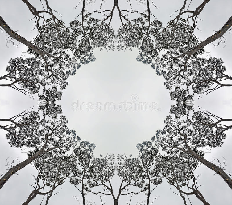 对称林冠层剪影 免版税库存照片