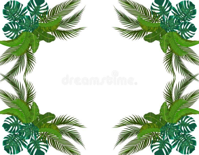 对称热带棕榈树绿色叶子  ?? Monstera,龙舌兰,香蕉 ?? 库存例证