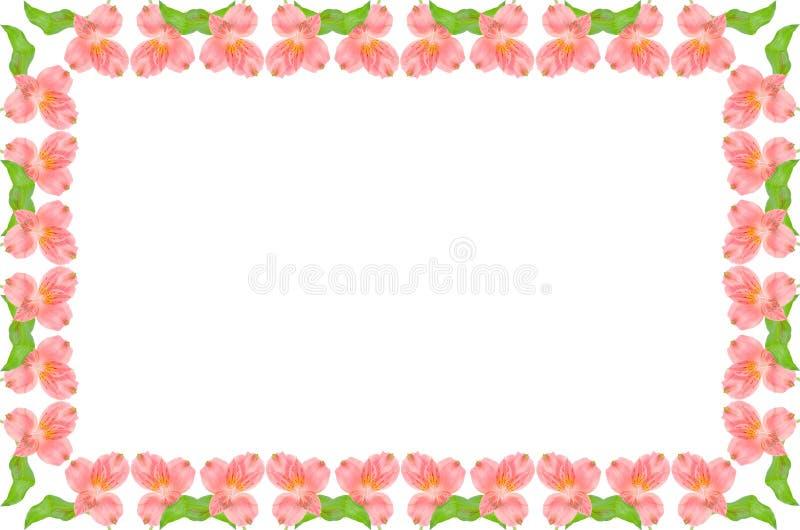 对称花卉框架绿色的粉红色 免版税图库摄影
