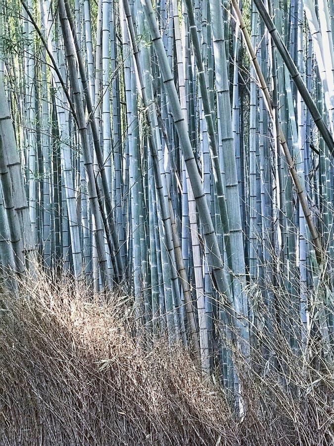 对竹森林庭院和干干草的美好的白天视图 库存照片