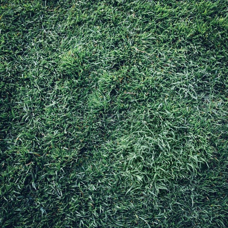对绿色草坪看法  免版税图库摄影