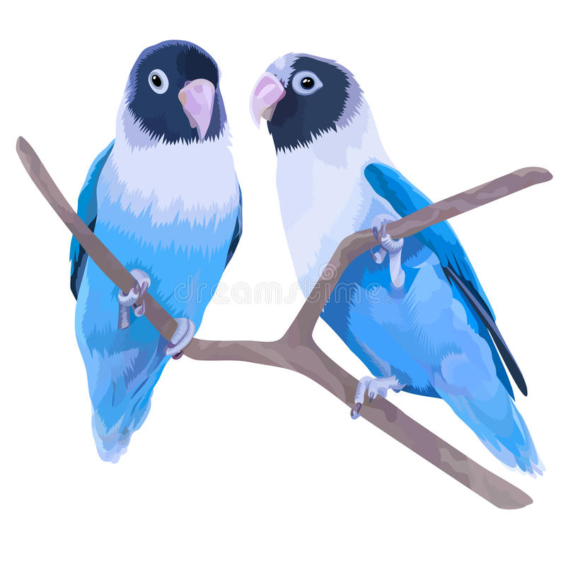 对蓝色被掩没的爱情鸟 向量例证