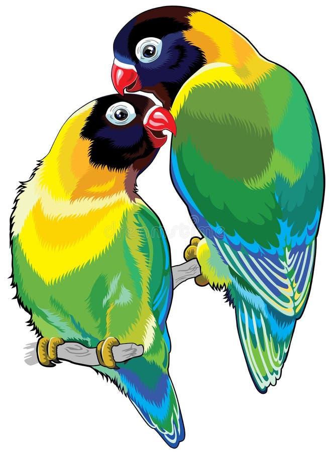 对被掩没的爱情鸟.
