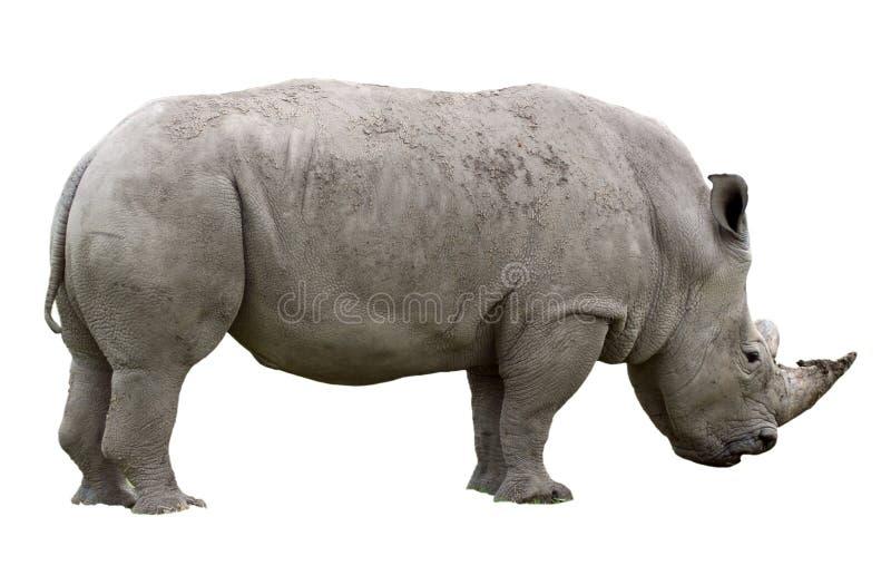 对象犀牛 免版税库存照片