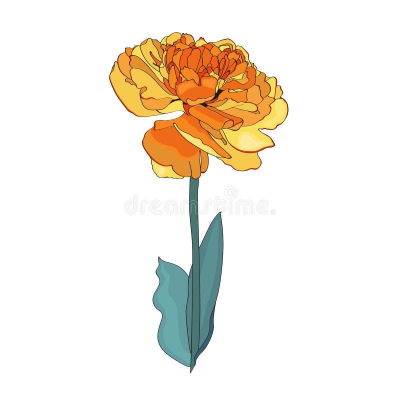 3对郁金香您版本的黄色的空的查出的空间文本 葡萄酒传染媒介植物的例证 皇族释放例证