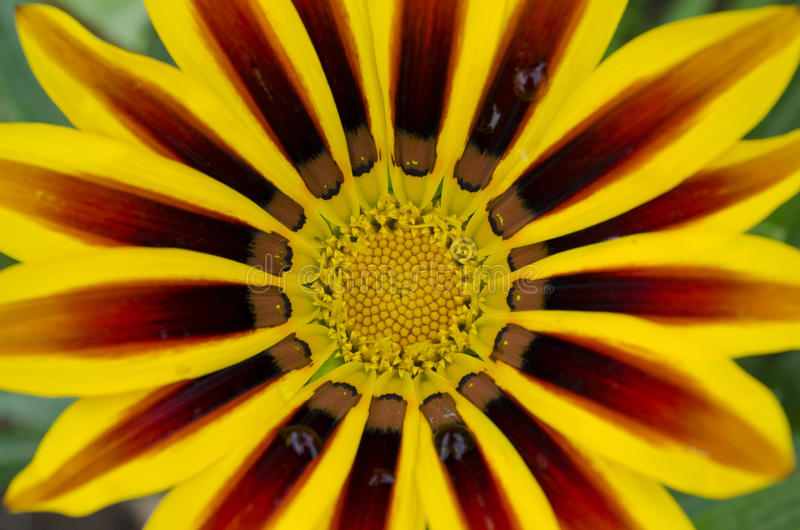 对野生植物的宏指令 库存图片