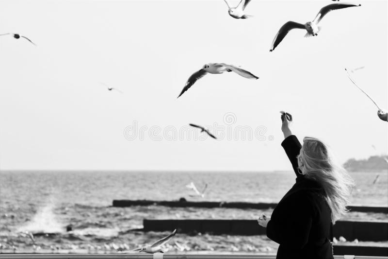 对饲料的一次年轻女人尝试某一海鸥 免版税库存照片