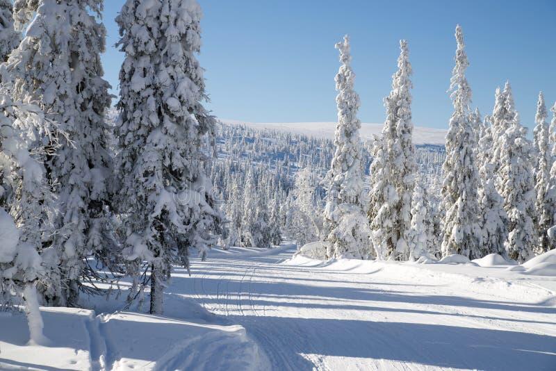 弯曲的滑雪轨道 免版税库存图片