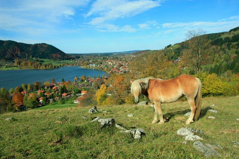 对schliersee疗养地的舍特兰群岛小马和湖景色 免版税库存照片