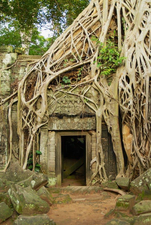 对Ta Prohm寺庙的废墟的看法在暹粒,柬埔寨 库存照片