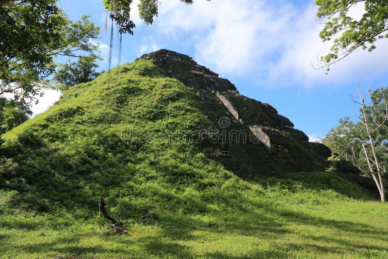 寺庙废墟在蒂卡尔国家公园,危地马拉 免版税库存照片