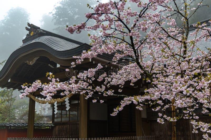 寺庙樱花 库存照片