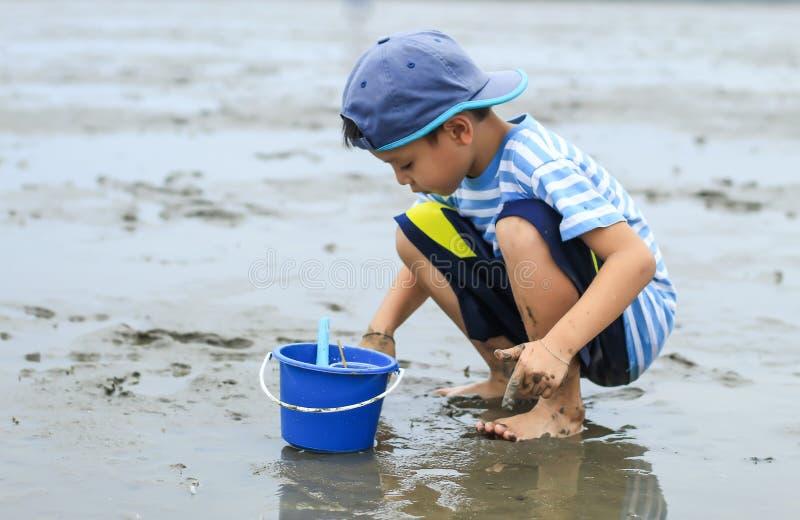 寻找在海底泥的男孩蜗牛壳 库存照片