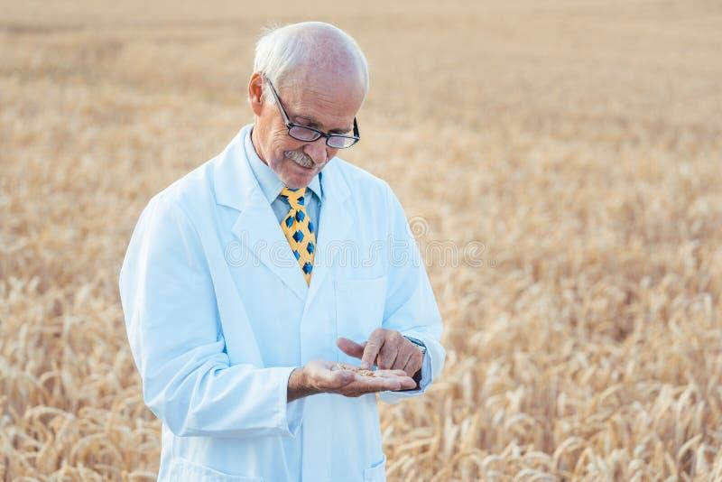 寻找新的种子的质量的农业科学家 免版税库存照片