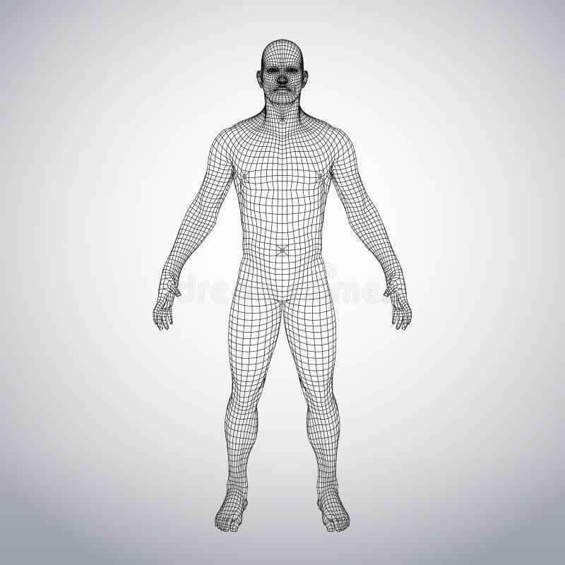 导线框架人体 在白色背景的多角形3d模型 皇族释放例证