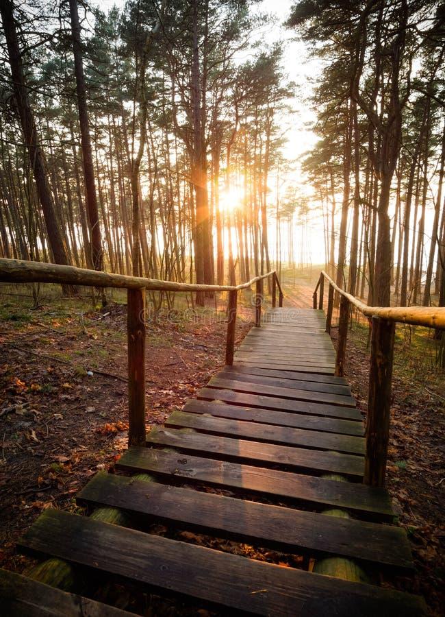 导致下来海的一个美丽的楼梯的老木步在杉木森林里在日落在立陶宛,克莱佩达 库存照片