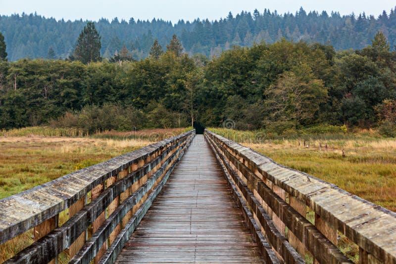 导致在沼泽地的长的走的木板走道森林 免版税库存图片