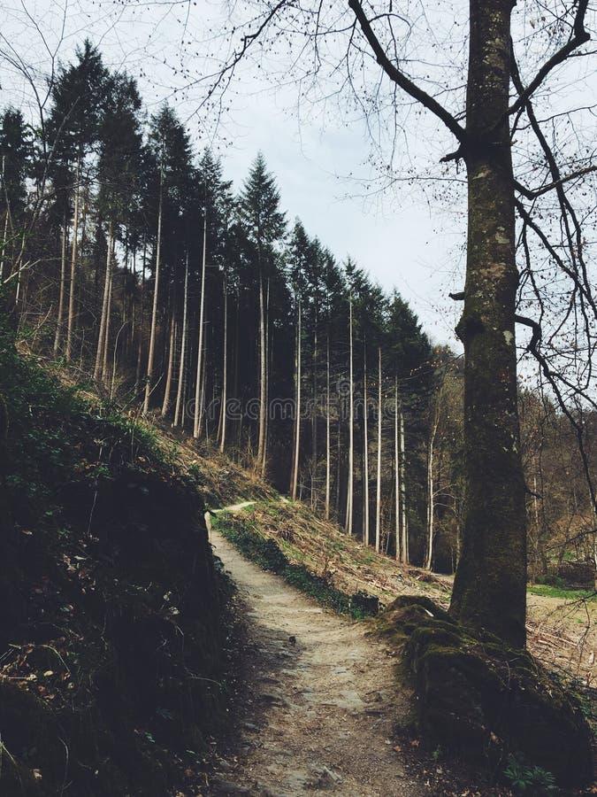 导致对小山的一个森林的路的垂直的射击 免版税库存图片