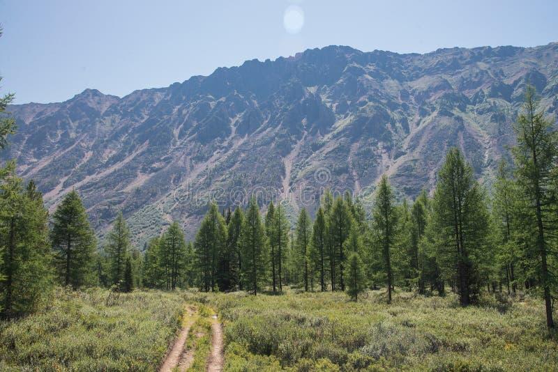 导致山夏天风景的森林农村路 免版税图库摄影
