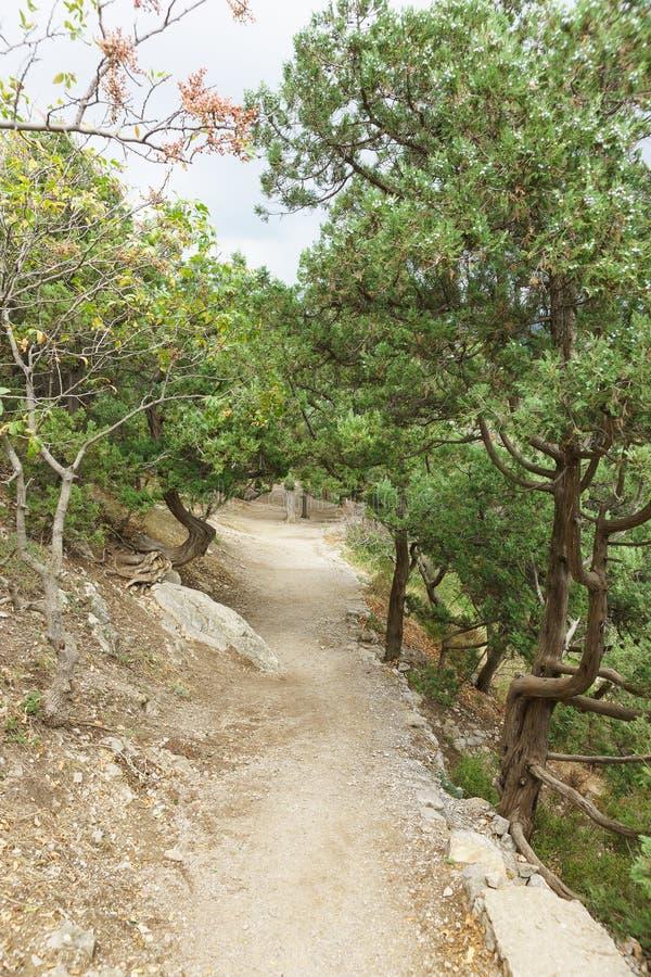 导致岩石歌剧女主角的道路在Simeiz 山杜松异常的树干  免版税库存图片