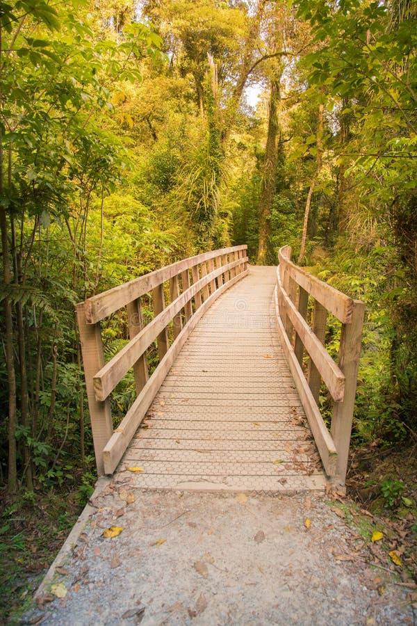 导致热带深森林密林的木走道 免版税图库摄影