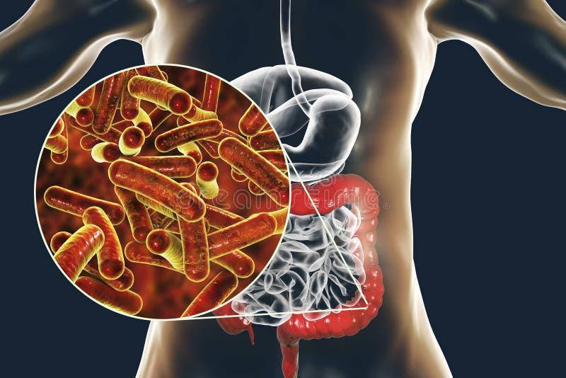 导致生产食物环节中的传染志贺杆菌性痢疾或痢疾的杆状的细菌肠细菌 向量例证