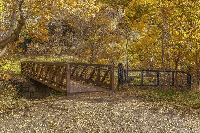 导致被日光照射了金黄森林的桥梁在犹他 图库摄影
