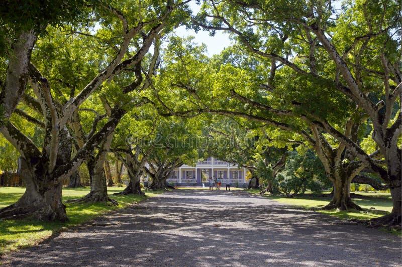 导致Chateau de Labourdonnais,殖民地宫殿,毛里求斯的platanes胡同 免版税图库摄影