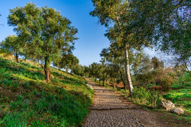 导致Volubilis罗马废墟的道路在摩洛哥 免版税库存图片