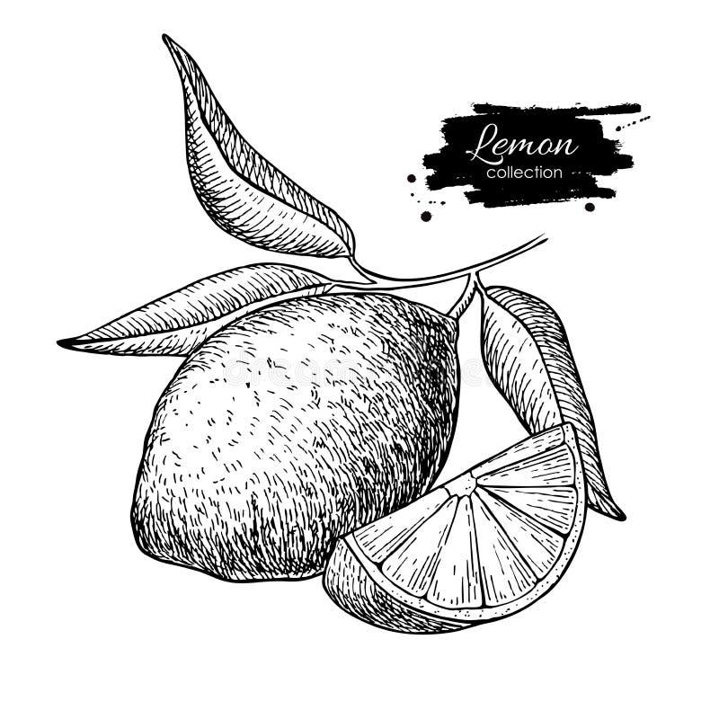 导航与叶子的手拉的柠檬或石灰果子在分支 库存例证