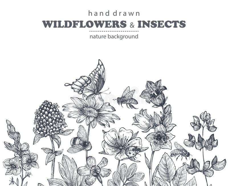 导航与手拉的春黄菊,野花,草本,蝴蝶,蜂的无缝的样式 向量例证