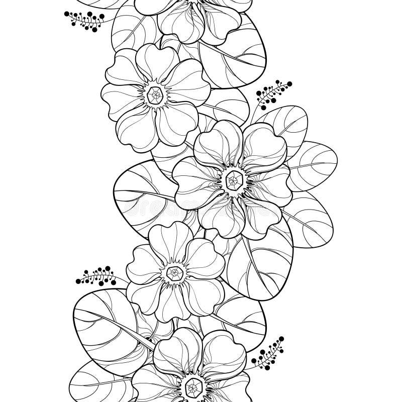 导航与概述樱草属的无缝的样式或报春花花和叶子在黑色在白色背景 垂直的边界 向量例证