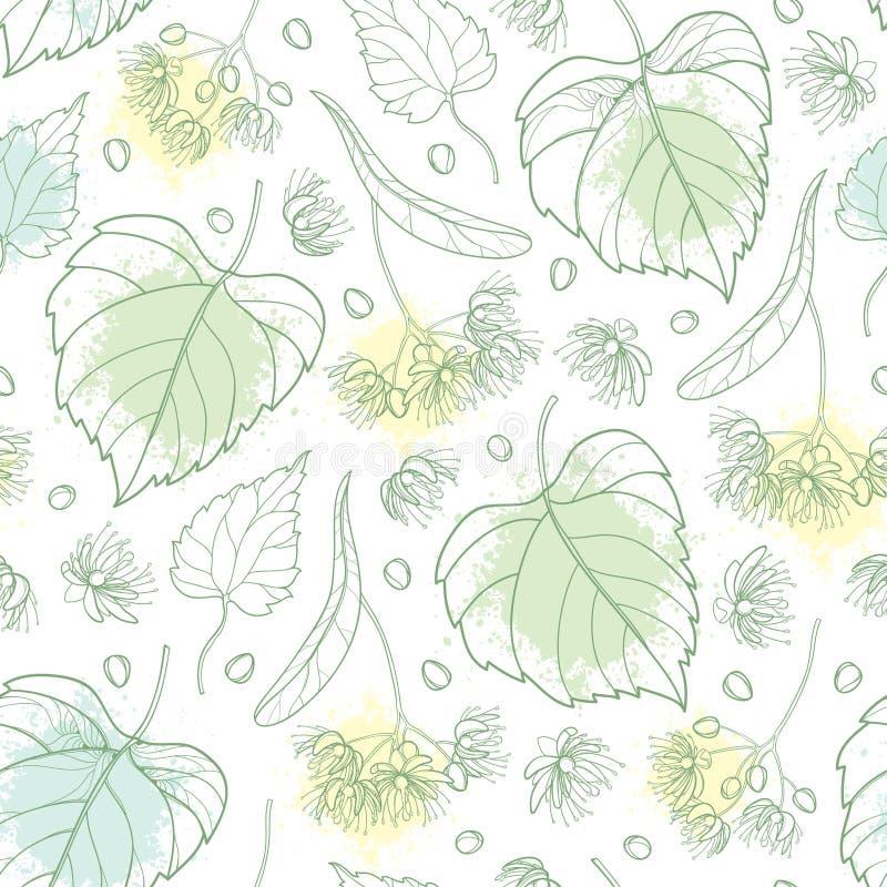 导航与概述菩提树或椴树属或者美国鹅掌楸花束的无缝的样式、苞、果子和华丽叶子以淡色绿色 向量例证