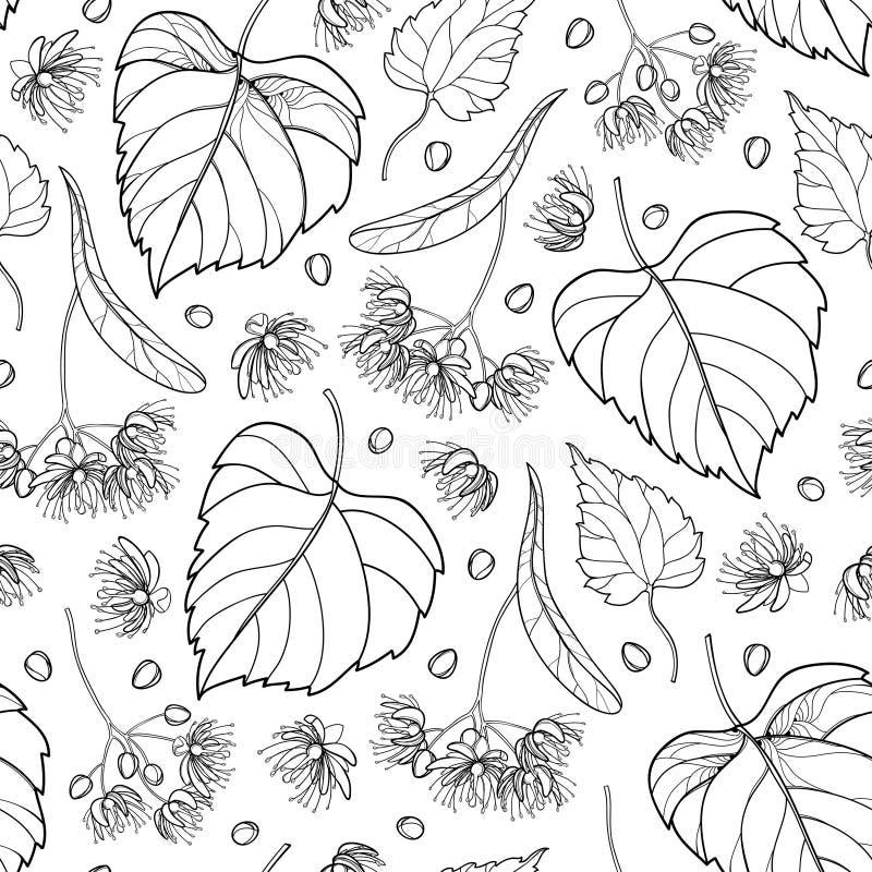 导航与概述菩提树或椴树属或者美国鹅掌楸花束的无缝的样式、苞、果子和华丽叶子在黑色在白色 库存例证