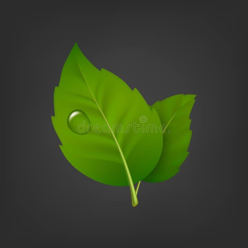 导航与露水绿色叶子对和下落的背景  现实象,在EPS10的设计模板 向量例证