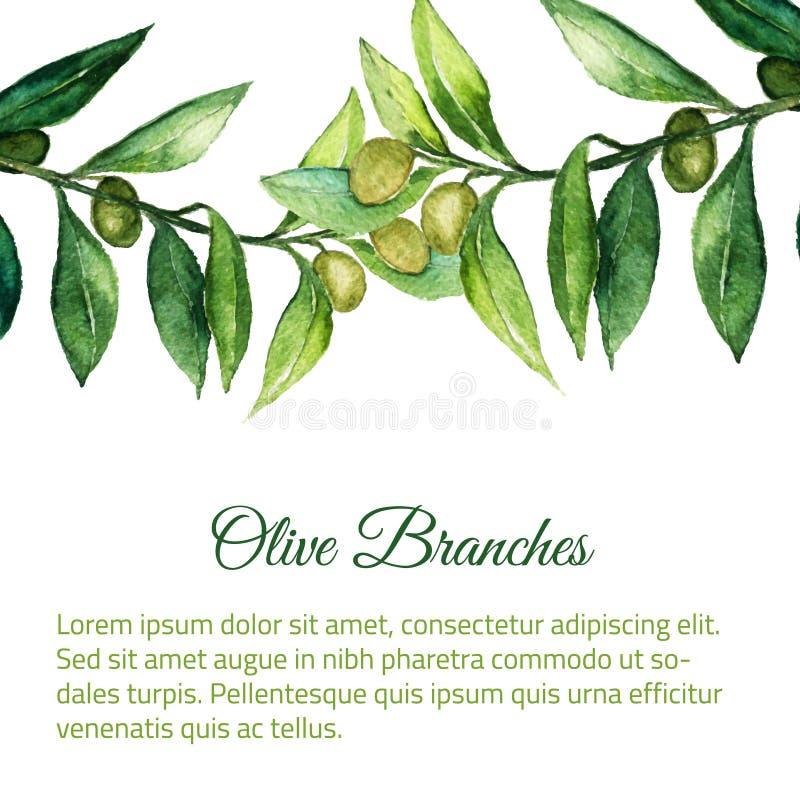 导航与绿色叶子的水彩手拉的橄榄树枝背景 库存例证